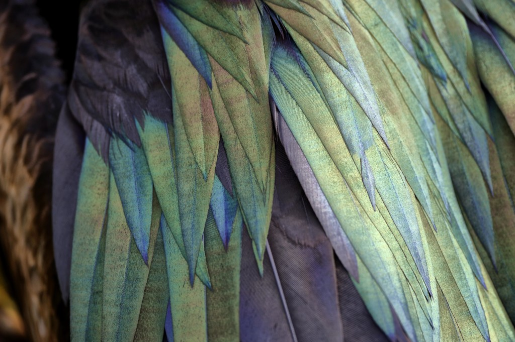 Bird Feathers Close Up | www.imgkid.com - The Image Kid ...