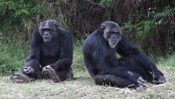 Image result for Sweetwaters Chimpanzees